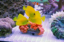 Fisch & Reptil - eine der führenden Messen der Branche